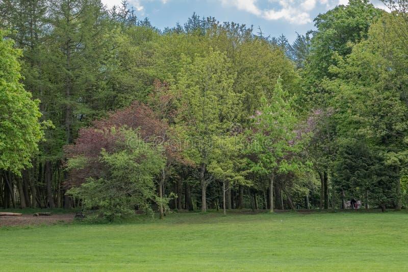 Όμορφα ώριμα σκωτσέζικα δέντρα που τίθενται σε ένα σκωτσέζικο πάρκο το καλοκαίρι στοκ εικόνα με δικαίωμα ελεύθερης χρήσης