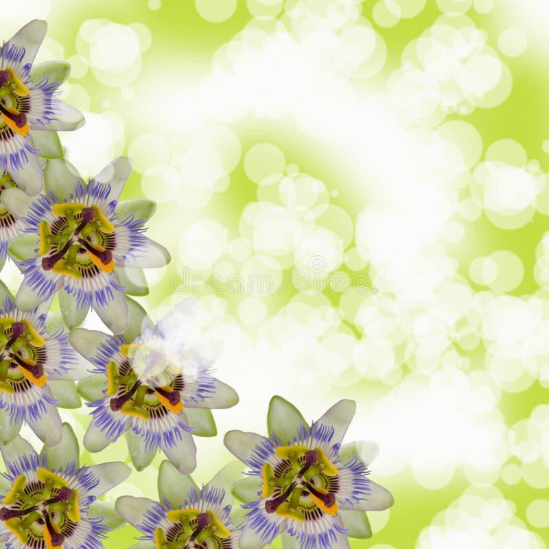 όμορφα flowes στοκ εικόνες με δικαίωμα ελεύθερης χρήσης