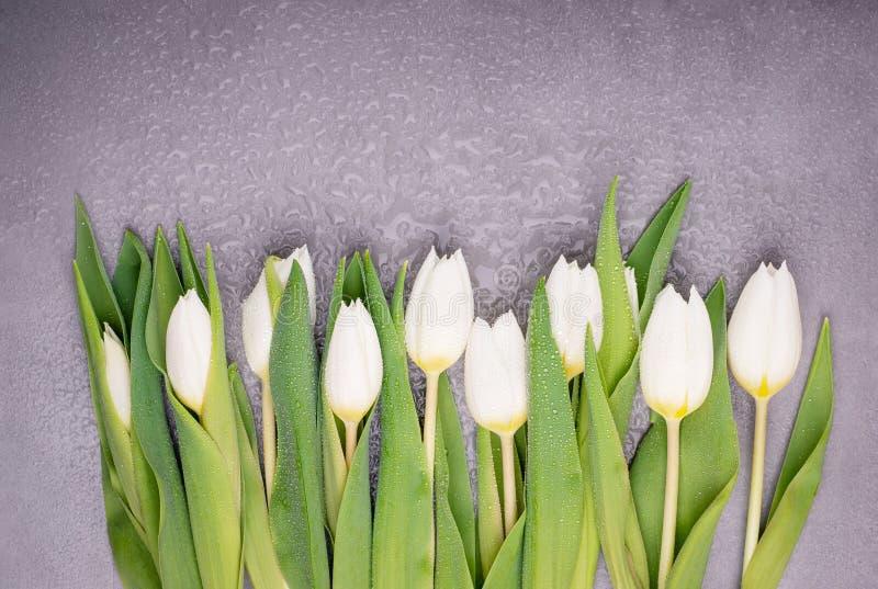 Όμορφες άσπρες τουλίπες με τη δροσιά σε ένα γκρίζο υπόβαθρο E στοκ φωτογραφία με δικαίωμα ελεύθερης χρήσης