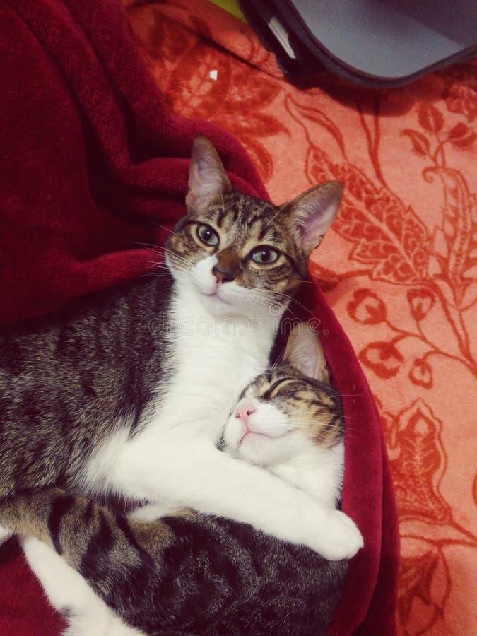 Όμορφες γάτες στοκ φωτογραφία
