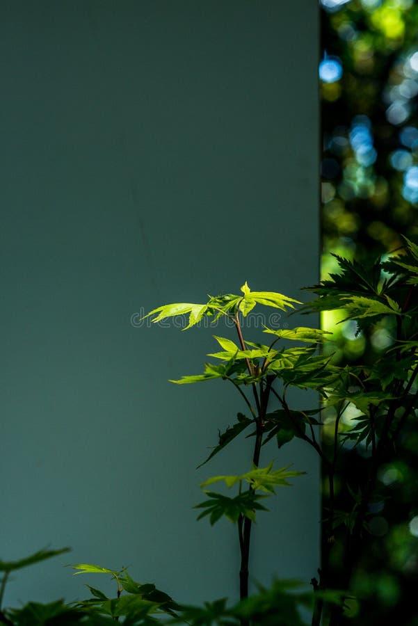 Όμορφες εγκαταστάσεις ¼ ŒGreen ρύθμισης λουλουδιών decorationï που λούζονται στον ήλιο ελεύθερη απεικόνιση δικαιώματος