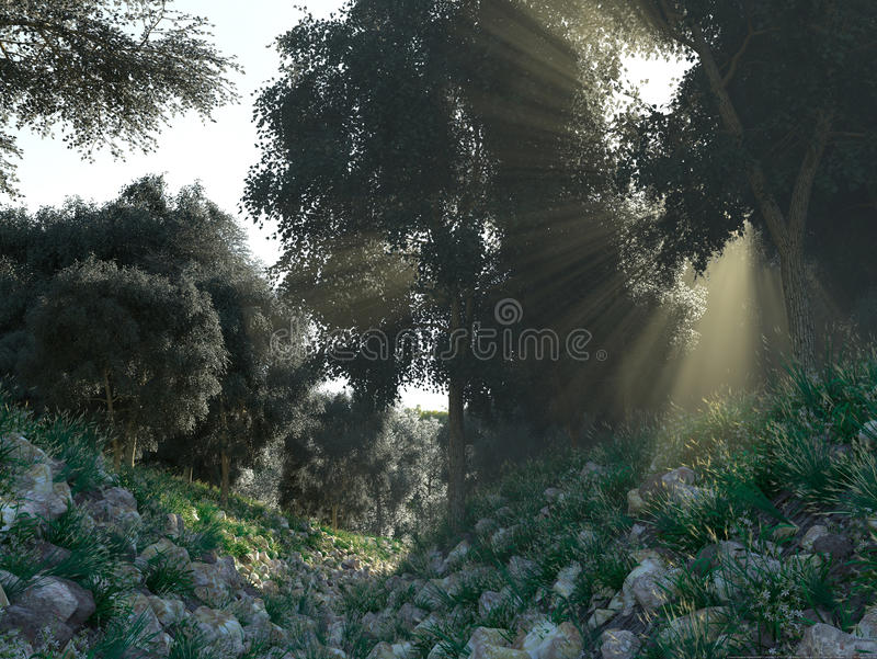 Όμορφες ηλιαχτίδες στο πράσινο δάσος στοκ εικόνες