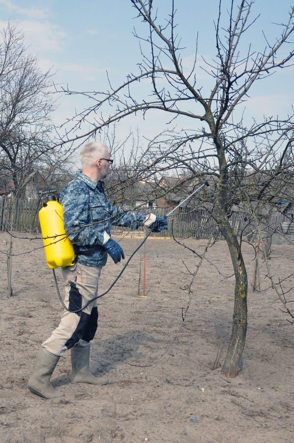 όμορφες νεολαίες ατόμων Ένας αρσενικός αγρότης χωρίς προσωπικό προστατευτικό εξοπλισμό ποτίζει τα οπωρωφόρα δέντρα δηλητήριων στοκ εικόνες