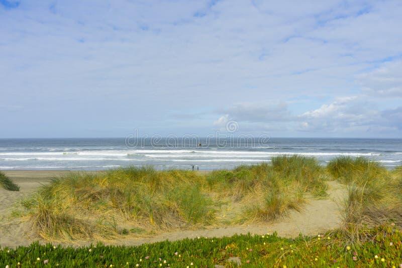 Όμορφες πράσινες χλόες στην ωκεάνια παραλία στο Σαν Φρανσίσκο, ασβέστιο στοκ φωτογραφία με δικαίωμα ελεύθερης χρήσης