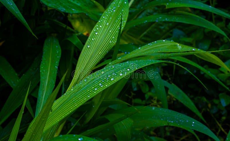 Όμορφες πτώσεις νερού στα φρέσκα πράσινα φύλλα μετά από τη βροχή στοκ φωτογραφία με δικαίωμα ελεύθερης χρήσης