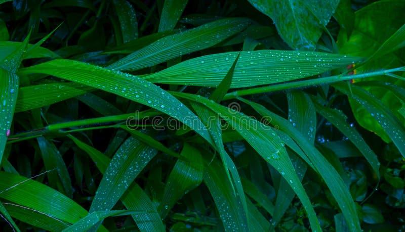 Όμορφες πτώσεις νερού στα φρέσκα πράσινα φύλλα μετά από τη βροχή στοκ εικόνες