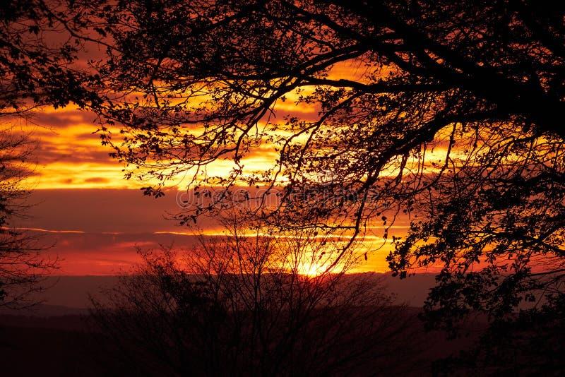 Όμορφες σκιαγραφίες των δέντρων ενάντια στο κόκκινο ηλιοβασίλεμα Σύσταση ή υπόβαθρο της Νίκαιας για τις ταπετσαρίες και τις απεικ στοκ εικόνες