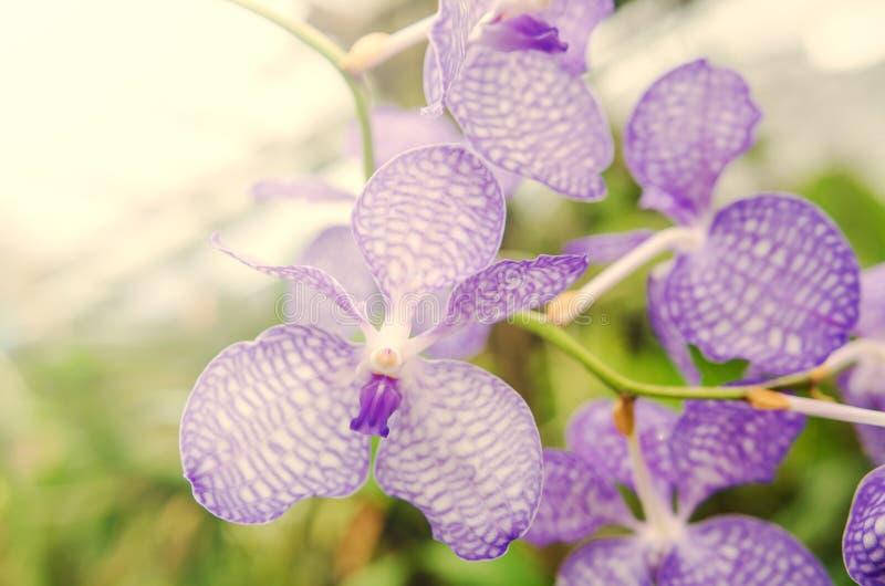 Όμορφη άνθιση ορχιδεών το πρωί στοκ φωτογραφία με δικαίωμα ελεύθερης χρήσης