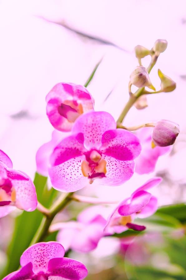 Όμορφη άνθιση ορχιδεών το πρωί στοκ φωτογραφία