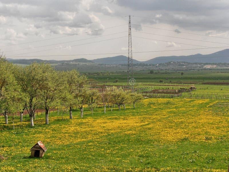 όμορφη άνοιξη λουλουδιών πεδίων πικραλίδων στοκ φωτογραφίες με δικαίωμα ελεύθερης χρήσης