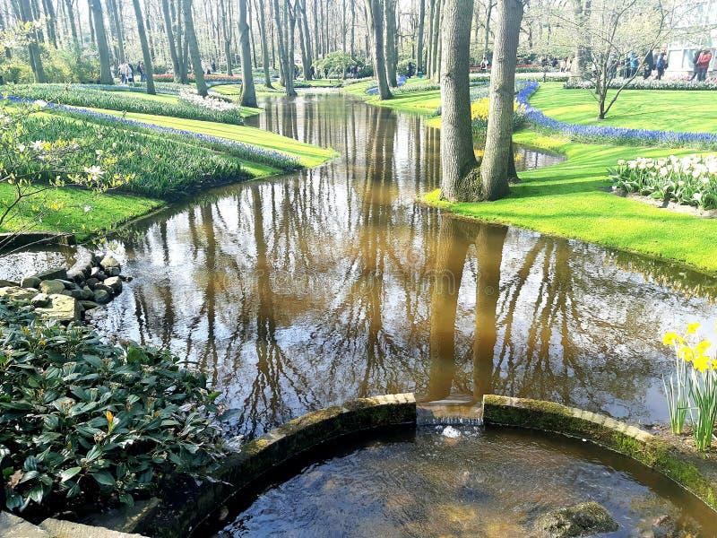 Όμορφη άποψη στον κήπο Keukenhof, Κάτω Χώρες Τρομερή άποψη της φύσης στοκ φωτογραφίες