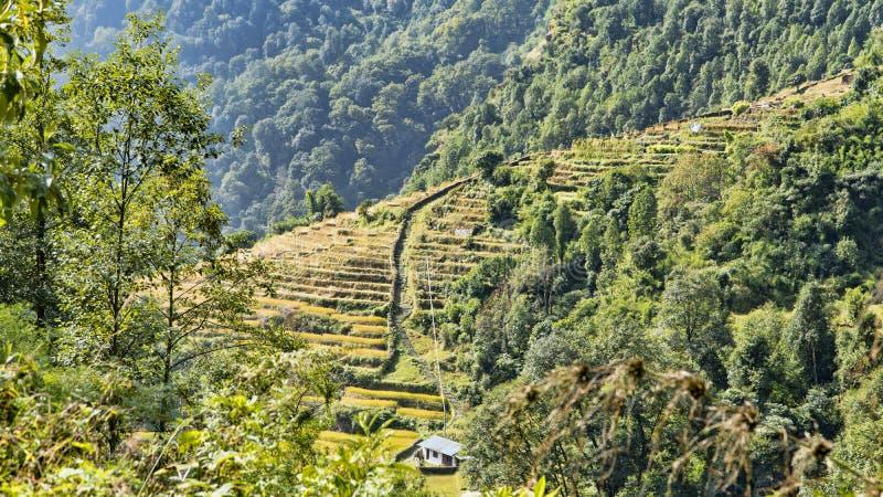 Όμορφη άποψη της φύσης σε ένα ίχνος οδοιπορίας στο στρατόπεδο βάσεων Annapurna, τα Ιμαλάια, Νεπάλ Τοπίο βουνών των Ιμαλαίων στοκ εικόνα
