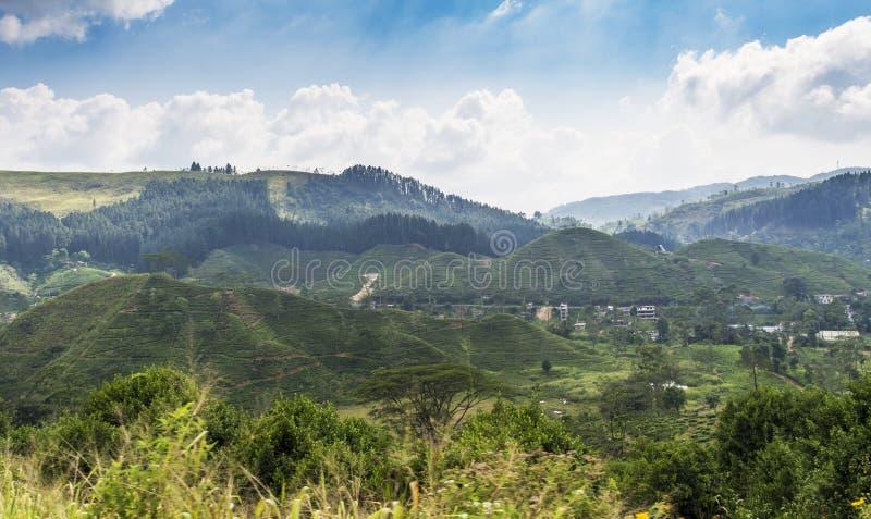 Όμορφη άποψη τοπίων με τους λόφους βουνών και φυτειών τσαγιού στοκ φωτογραφία με δικαίωμα ελεύθερης χρήσης