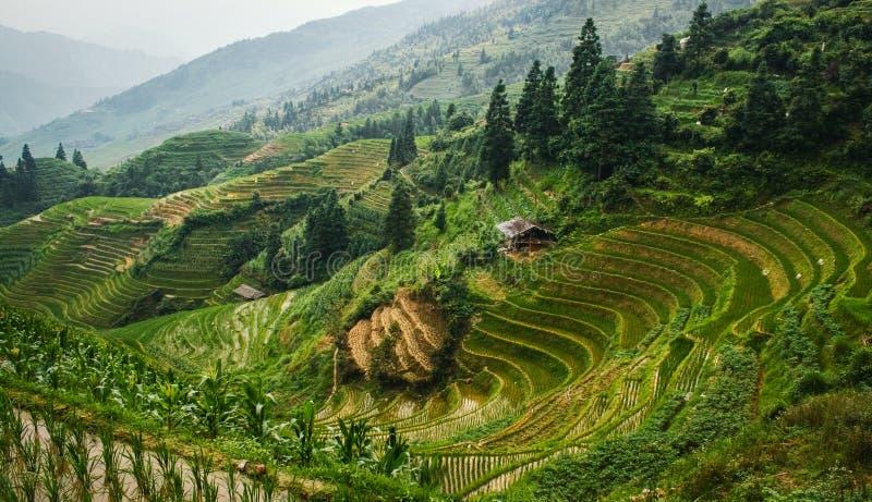 Όμορφη άποψη τοπίων των πεζουλιών και του σπιτιού ρυζιού Πεζούλια ρυζιού Longsheng Κίνα στοκ εικόνα με δικαίωμα ελεύθερης χρήσης