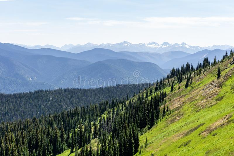 Όμορφη άποψη του λιβαδιού βουνών στο θερινή περίοδο ηλιόλουστο καιρικό μπλε ουρανό και το πράσινο δασικό υπόβαθρο στοκ φωτογραφίες