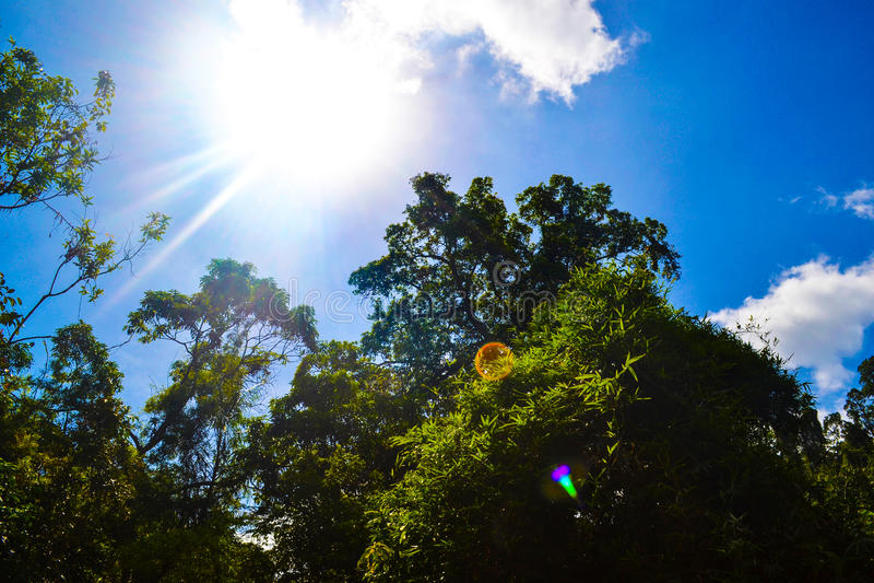 Όμορφη άποψη του φωτός του ήλιου που φωτίζει τα δέντρα της ζούγκλας ενάντια στο φωτεινό σύννεφο μπλε ουρανού στοκ εικόνες
