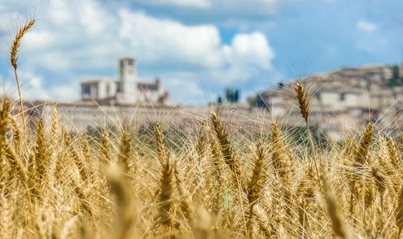 Όμορφη άποψη του χρυσού τομέα συγκομιδών και της θολωμένης πόλης Assisi στο υπόβαθρο, Ουμβρία, Ιταλία στοκ εικόνα με δικαίωμα ελεύθερης χρήσης
