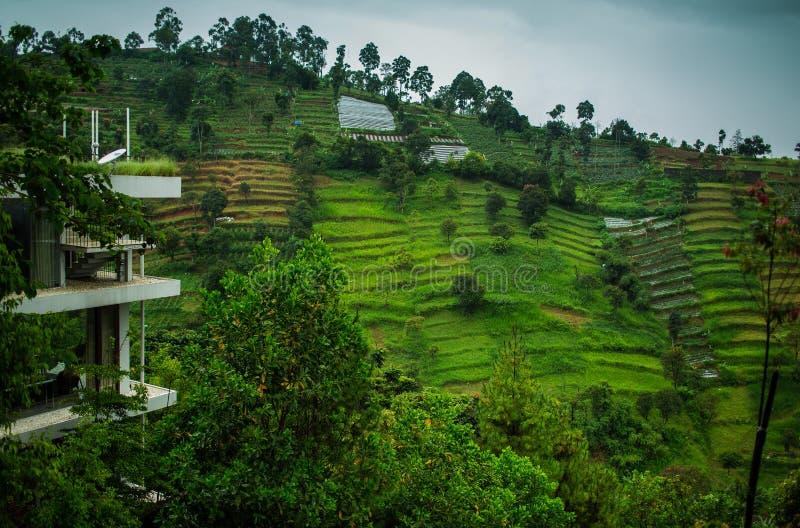 Φυτείες τσαγιού στο προάστιο Bandung. Ινδονησία στοκ εικόνα