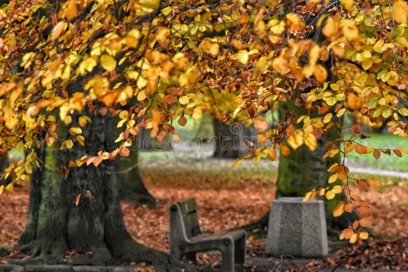 Όμορφη αλέα φθινοπώρου στο Gdynia, Πολωνία στοκ φωτογραφίες