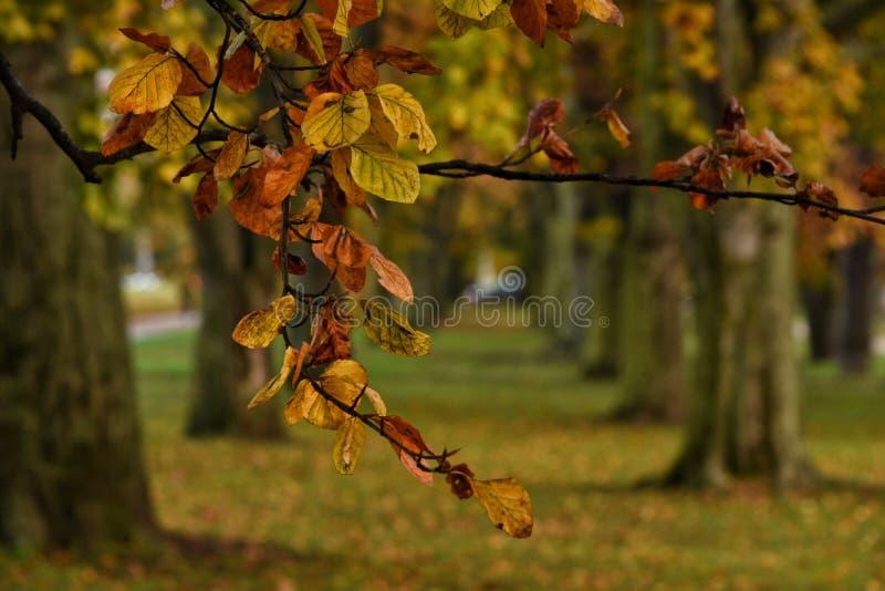 Όμορφη αλέα φθινοπώρου στο Gdynia, Πολωνία στοκ φωτογραφία με δικαίωμα ελεύθερης χρήσης