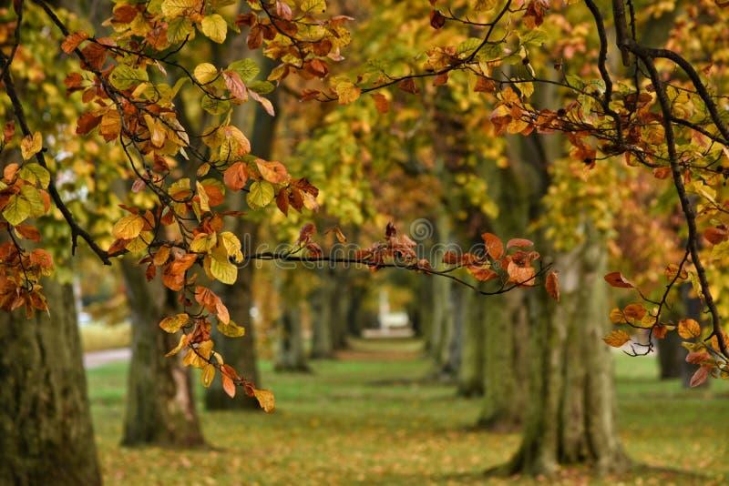 Όμορφη αλέα φθινοπώρου στο Gdynia, Πολωνία στοκ εικόνες