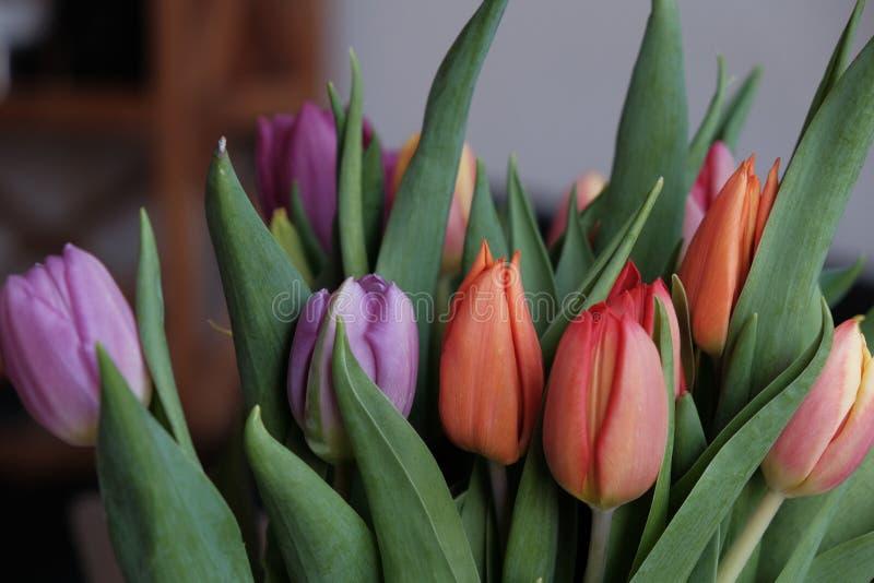 Όμορφη ανθοδέσμη τουλιπών με τα πορφυρά και πορτοκαλιά λουλούδια στοκ φωτογραφίες