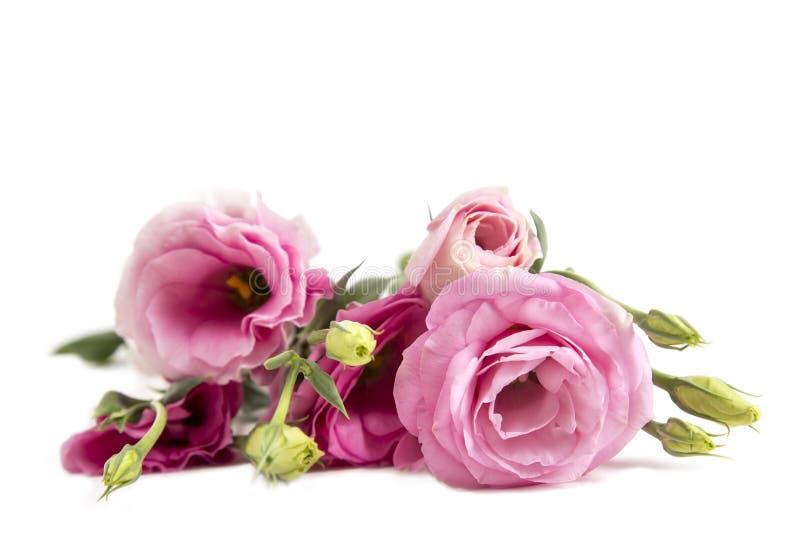 Όμορφη ανθοδέσμη λουλουδιών Lisianthus στο άσπρο υπόβαθρο στοκ εικόνα με δικαίωμα ελεύθερης χρήσης