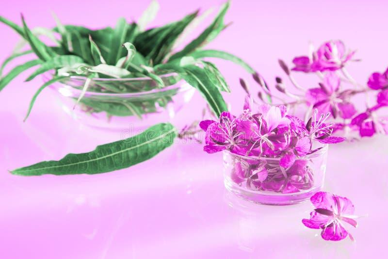 Όμορφη ανοιξιάτικη σύνθεση των λουλουδιών και των φύλλων από βότανα στοκ φωτογραφία με δικαίωμα ελεύθερης χρήσης