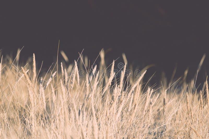 Όμορφη αφηρημένη σύσταση χλόης υποβάθρου στο ηλιοβασίλεμα - τρύγος στοκ εικόνα