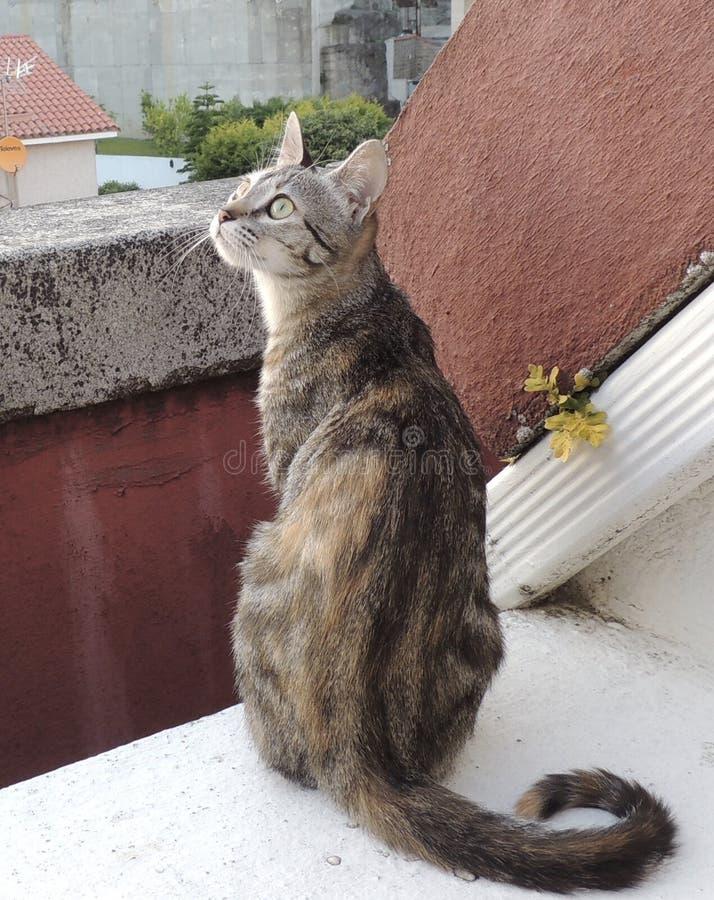 Όμορφη γάτα που φαίνεται εξετάζοντας τον ουρανό στοκ φωτογραφία