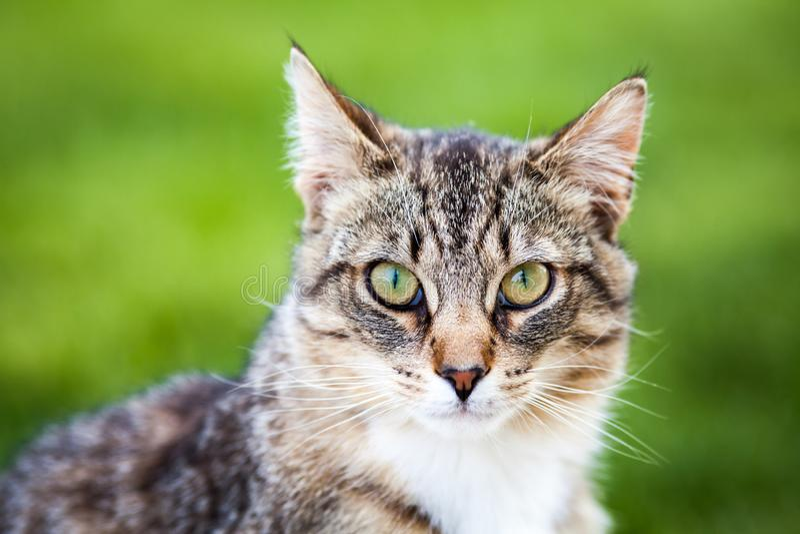 Όμορφη γάτα τιγρών στοκ εικόνες