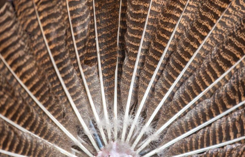 Όμορφη γούνα της Τουρκίας στοκ φωτογραφία με δικαίωμα ελεύθερης χρήσης