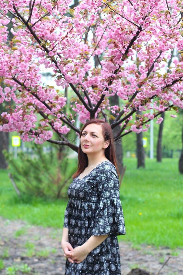 Όμορφη γυναίκα με το ρόδινα λουλούδι sakura και το υπόβαθρο μπλε ουρανού Πορτρέτο μιας γυναίκας σε ένα υπόβαθρο του sakura στοκ εικόνα