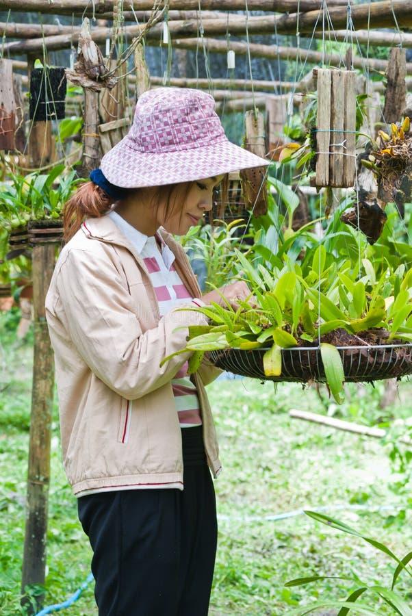 Όμορφη γυναίκα που εργάζεται orchid στο αγρόκτημα. στοκ φωτογραφία με δικαίωμα ελεύθερης χρήσης