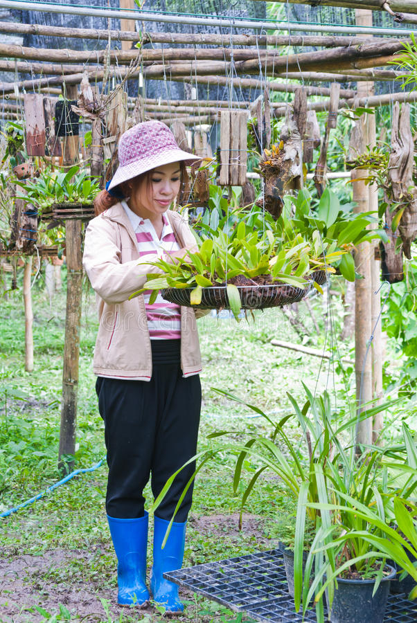 Όμορφη γυναίκα που εργάζεται orchid στο αγρόκτημα. στοκ φωτογραφίες