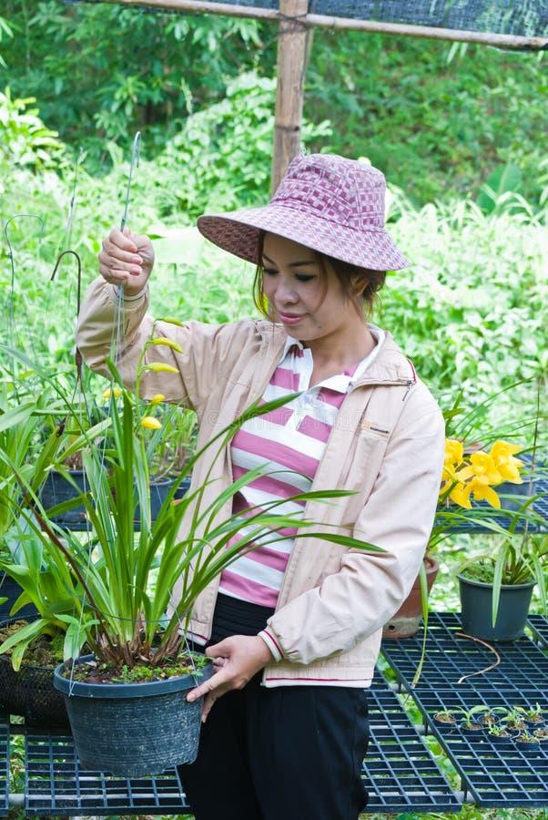Όμορφη γυναίκα που εργάζεται orchid στο αγρόκτημα. στοκ φωτογραφία