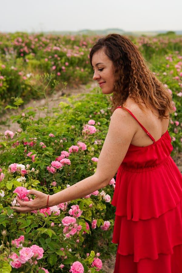 Όμορφη γυναίκα στο κόκκινο φόρεμα σε έναν τομέα των ανθίζοντας τριαντάφυλλων στοκ φωτογραφίες με δικαίωμα ελεύθερης χρήσης