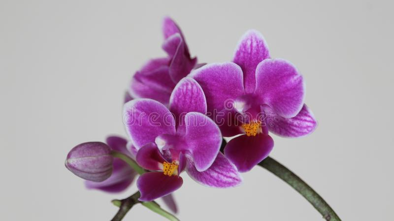Όμορφη διανομή ορχιδεών του έντονου χρώματος και πολλής ομορφιάς στοκ εικόνα