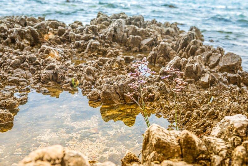 Όμορφη δύσκολη παραλία σε Istria στοκ εικόνες με δικαίωμα ελεύθερης χρήσης