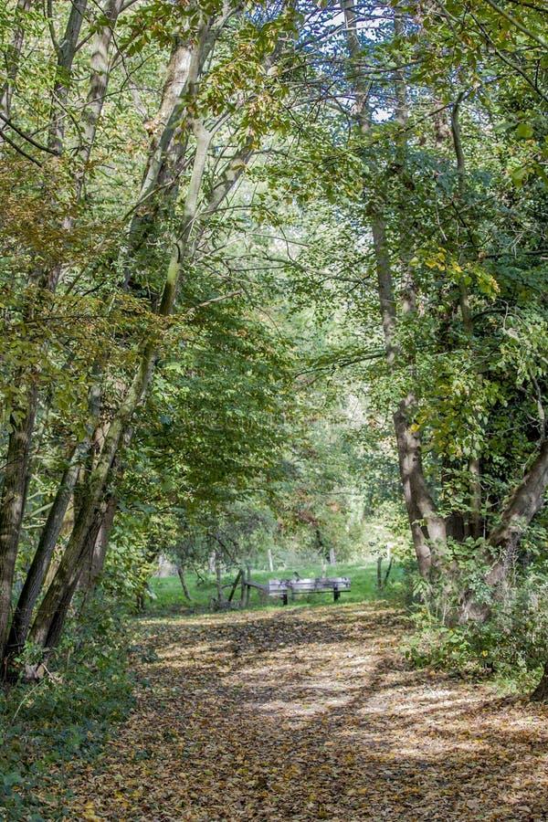 Όμορφη εικόνα μιας πορείας που οδηγεί σε έναν πάγκο στα ξύλα στοκ φωτογραφίες