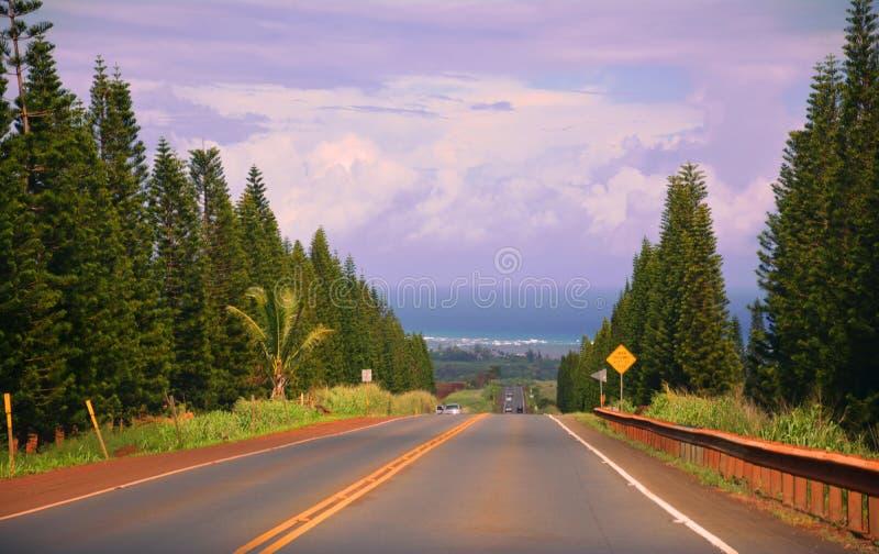 Όμορφη εικόνα του δρόμου που περνά κατ' ευθείαν από τα δέντρα στο Ειρηνικό Ωκεανό στοκ φωτογραφία με δικαίωμα ελεύθερης χρήσης