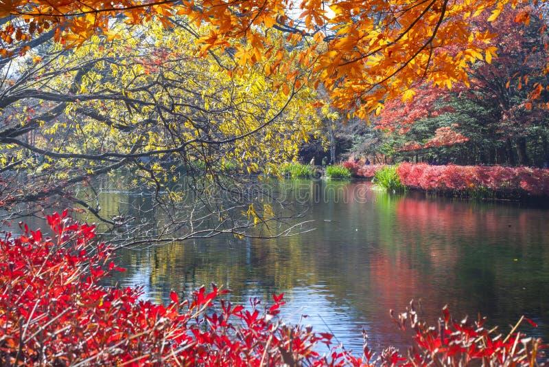 Όμορφη εποχή σφενδάμνου στη λίμνη Kumoba, Karuizawa, Ιαπωνία στοκ εικόνες
