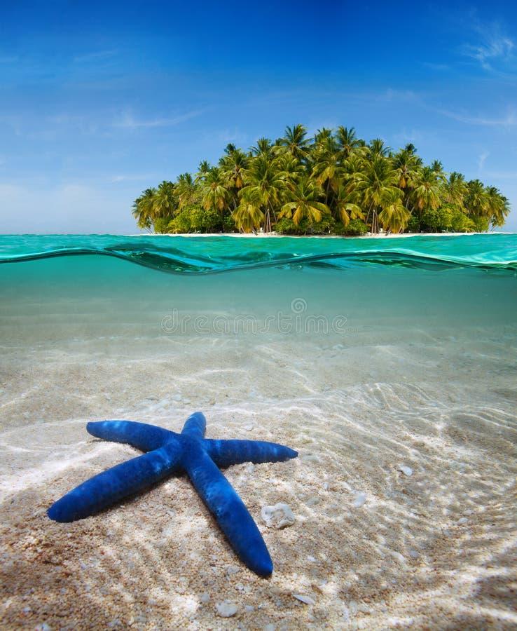 όμορφη ζωή νησιών κοντά σε υποβρύχιο στοκ εικόνες