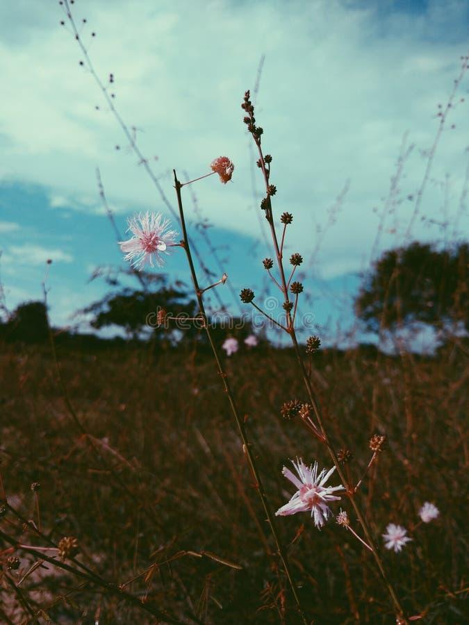όμορφη ημέρα στοκ φωτογραφία