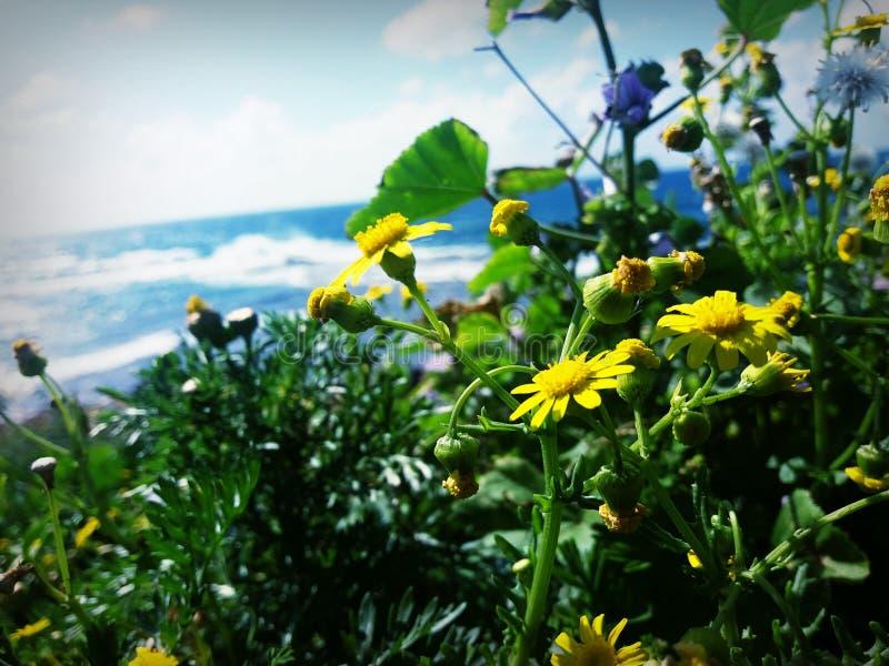 Όμορφη θάλασσα στοκ φωτογραφία με δικαίωμα ελεύθερης χρήσης