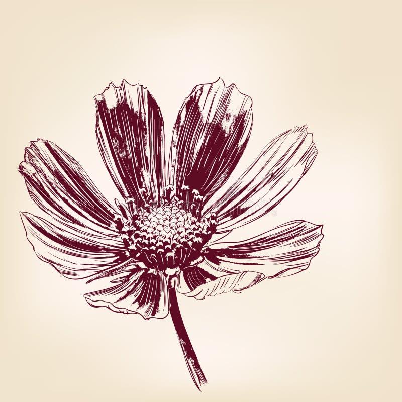 Όμορφη διανυσματική απεικόνιση μαργαριτών λουλουδιών απεικόνιση αποθεμάτων