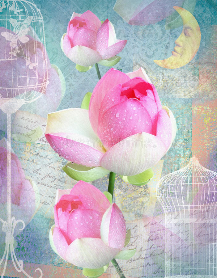 Όμορφη κάρτα συγχαρητηρίων με τα peonies, τα κύτταρα και το φεγγάρι διανυσματική απεικόνιση
