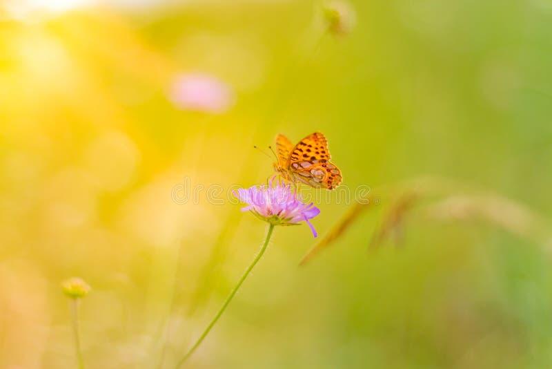 Όμορφη κινηματογράφηση σε πρώτο πλάνο φύσης, θερινά λουλούδια και πεταλούδα κάτω από το φως του ήλιου Ήρεμο υπόβαθρο φύσης στοκ εικόνα με δικαίωμα ελεύθερης χρήσης
