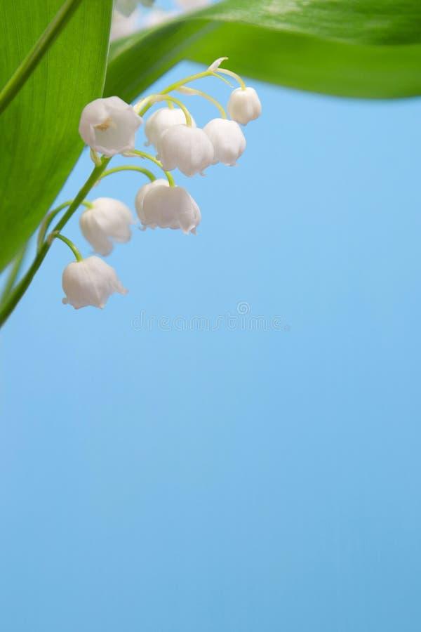 όμορφη κοιλάδα κρίνων λο&upsilon στοκ φωτογραφίες με δικαίωμα ελεύθερης χρήσης