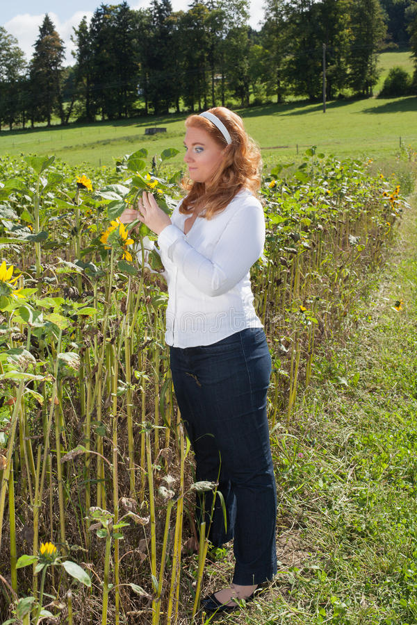 Όμορφη κοκκινομάλλης υπέρβαρη γυναίκα σε έναν τομέα ηλίανθων στοκ εικόνα με δικαίωμα ελεύθερης χρήσης